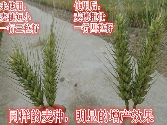 实拍农户对比案例 (2)