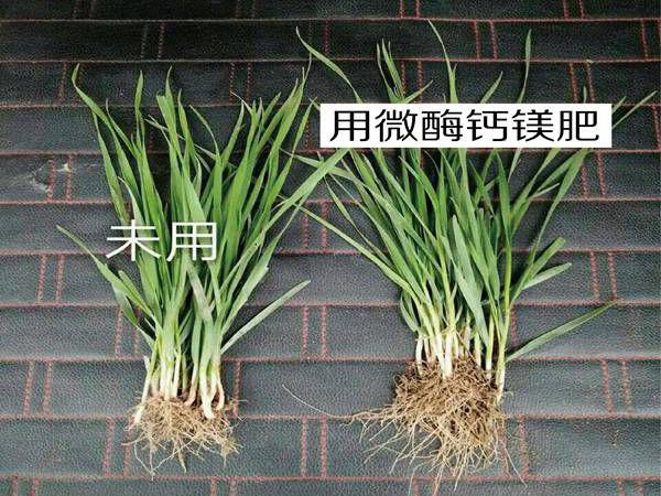 实拍农户对比案例 (7)